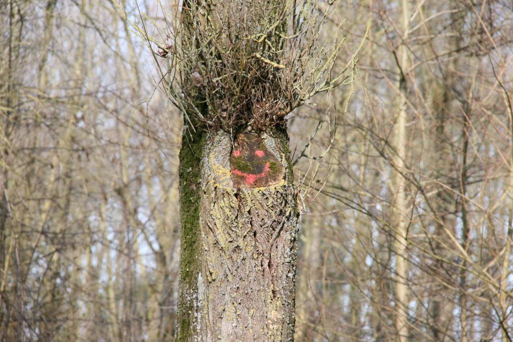 9. L'arbre d'Hervé